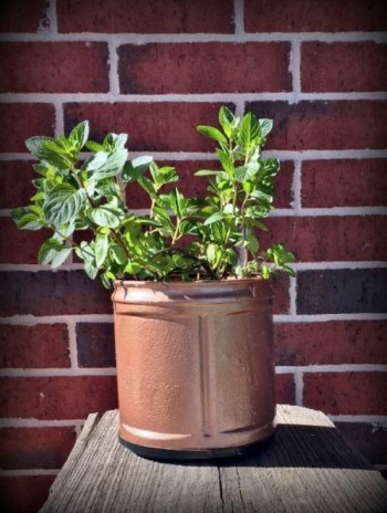 Upcycled coffee can planter