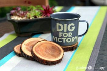 Diy natural branch coasters