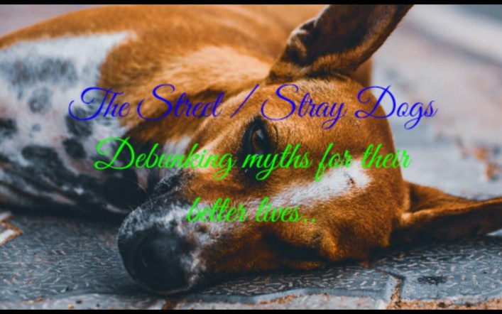 THE STREET/ STRAY DOGS: Debunking myths, for their long-overdue, much-deserved better lives.