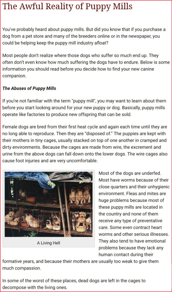 Buying vs adopting a dog: The soul shattering reality behind puppy mills!