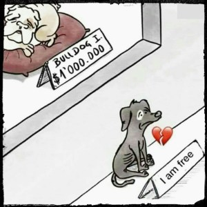 Buying vs adopting a dog- the irony.