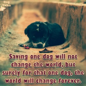 Buying vs adopting a dog: Saving a dog may not change the whole world, but for that one dog, the whole world changes!