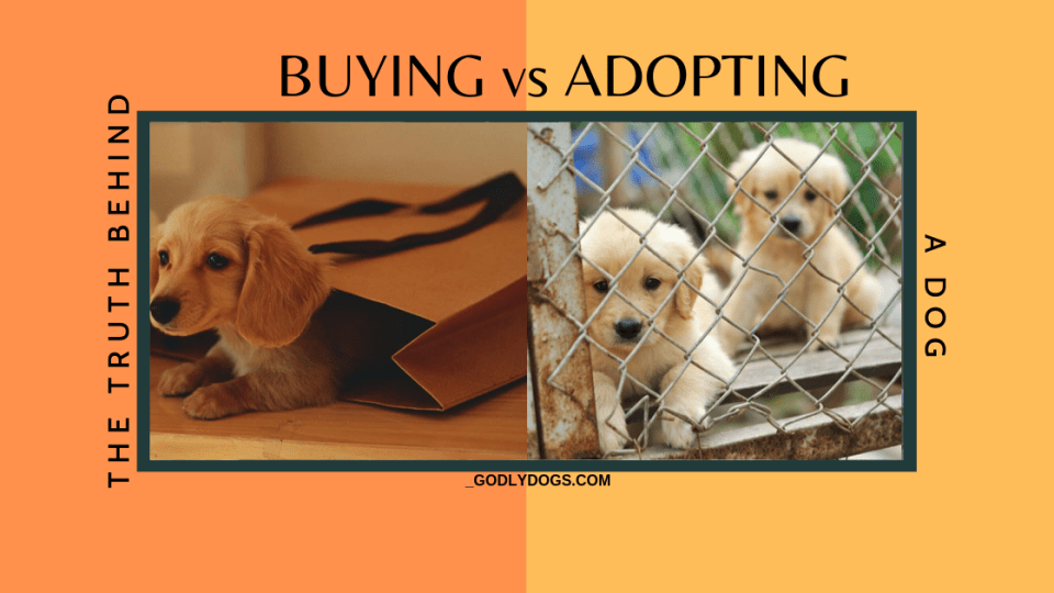 The truth behind BUYING vs ADOPTING a DOG by godlydogs.com