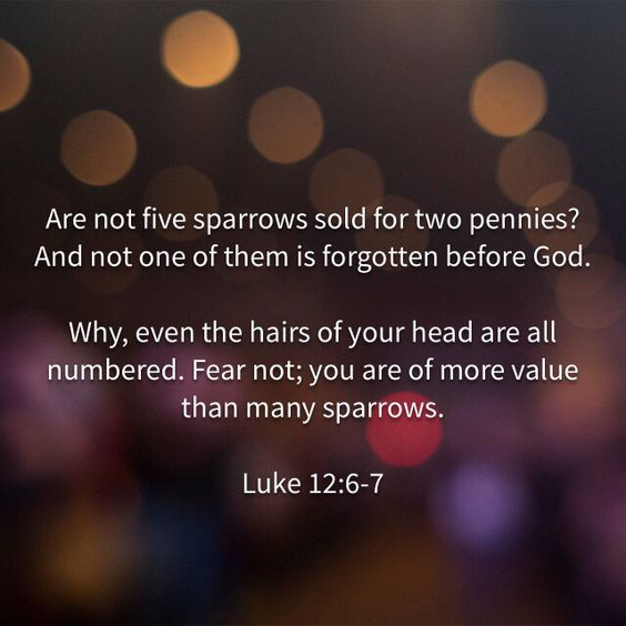 Luke 12:6-7 Are not five sparrows sold for two farthings, and not one of them is forgotten before God? But even the very hairs of your head are all numbered. Fear not therefore: ye are of more value than many sparrows.