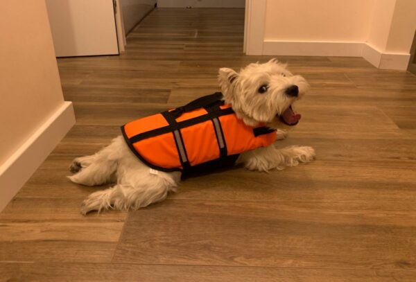 Спасательный жилет на собаку Вест-хайленд-уайт-терьер