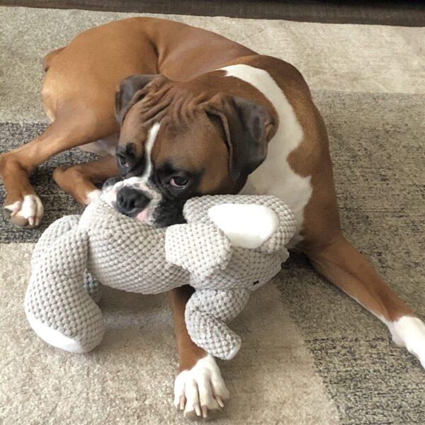 Large Dog Boxer Breed with Checkers Elephant GoDog Toy