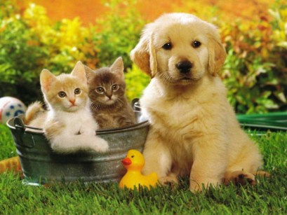 78947087_wallpapers_cats_313