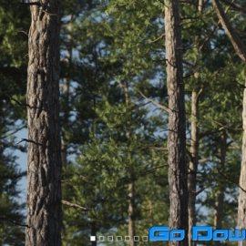 Vertex Trees – Scots Pines Bundle (MAX, C4D, Houdini, FBX)