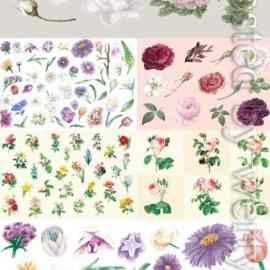 Drawn vector different flowers Free Download