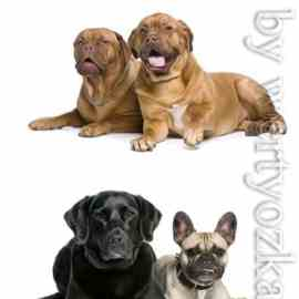 Purebred cats and dogs Free Download