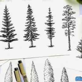 Let's Sketch Trees- Pine Trees | Birch Tree | Shrubs | Bushes – Floral Illustration