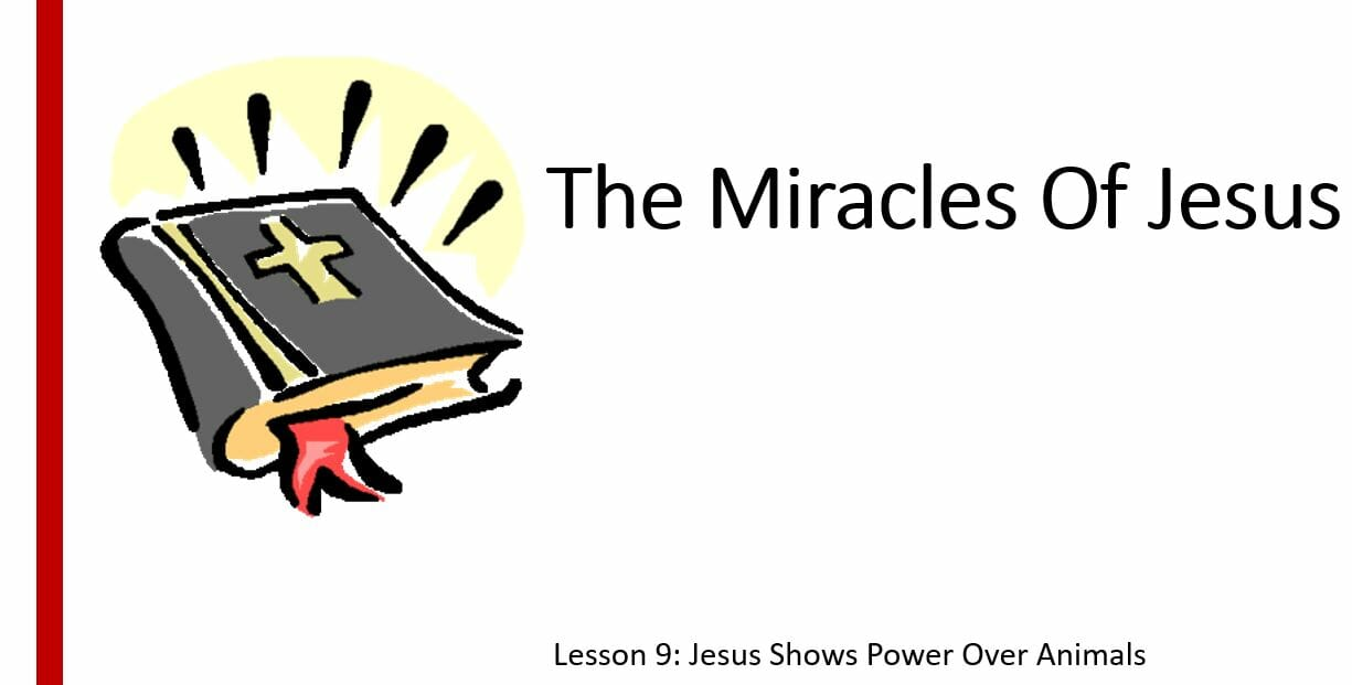 The Miracles Of Jesus ( Lesson 9: Jesus Show Power Over Animals)