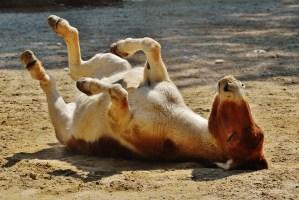 donkey, animal, play