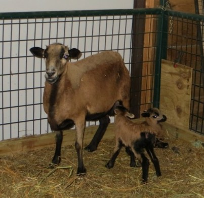Ebony and her twins
