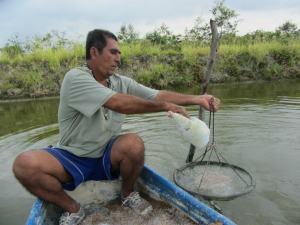 volunteer at shrimp farm in ecuador
