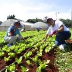 volunteer in cuba