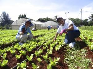 Alamar Organic Co-Op Farm in Cuba