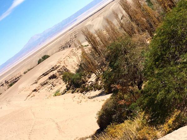Atacama vegetation