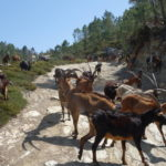 """「フィズガズ・デ・エルメーロ(滝)」トレッキングコース(アルヴァン自然公園)ーPercurso Pedestre """"Fisgas de Ermelo"""" (Parque Natural do Alvão)"""
