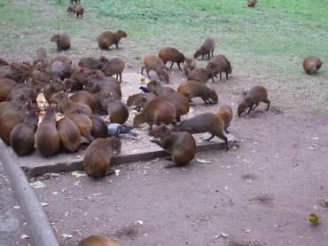 Animals in park in Rio de Janiero