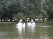 Swan boats in Porto Alegre, Brazil