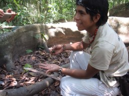 Amazon Rainforest - Tarantula Tours