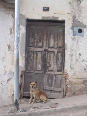 Dog in Sucre, Bolivia