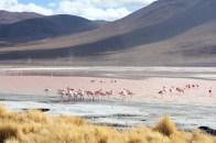 Bolivia Salt Flat Tour, Day 2