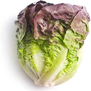Lettuce Romaine Red