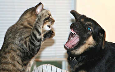 fighting like cats and dogs