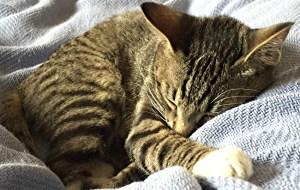 ozzy, the cute kitten