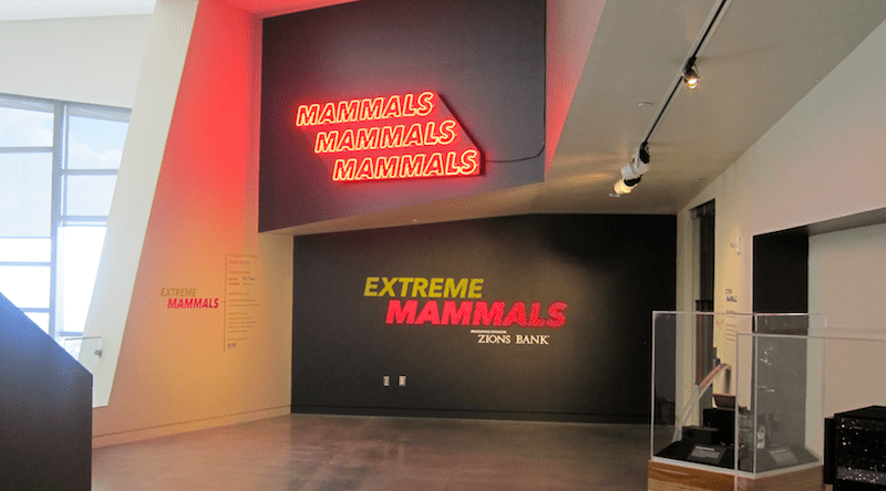 extreme mammals exhibit