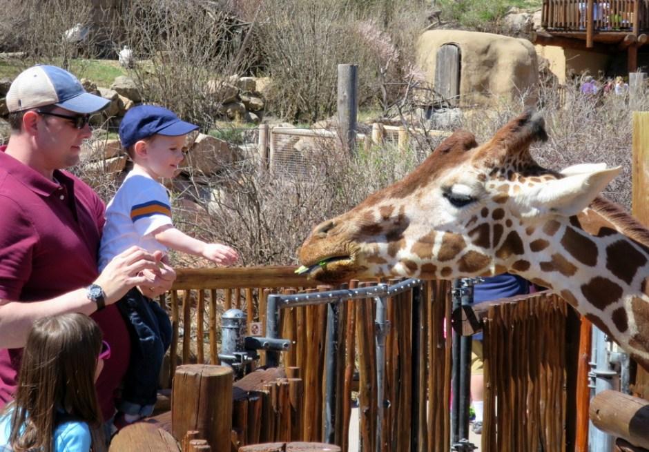 cheyenne mountain zoo, feeding giraffes