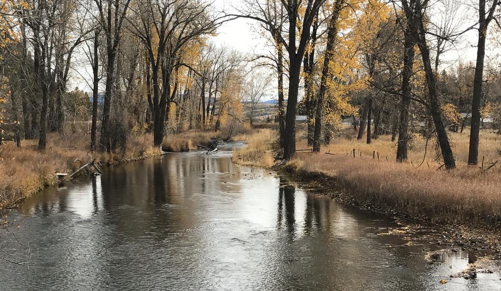meandering stream, autumn in montana