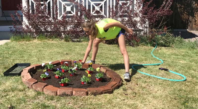 planting pansy's in flower garden