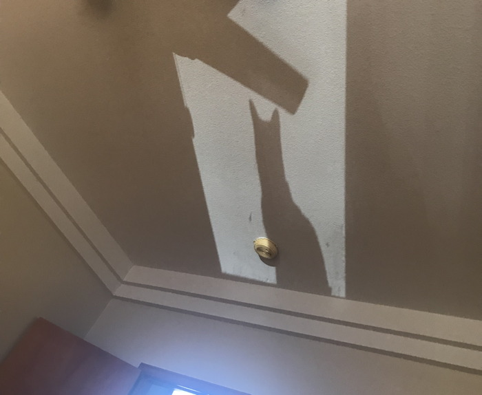 creepy shadow of cat on ceiling