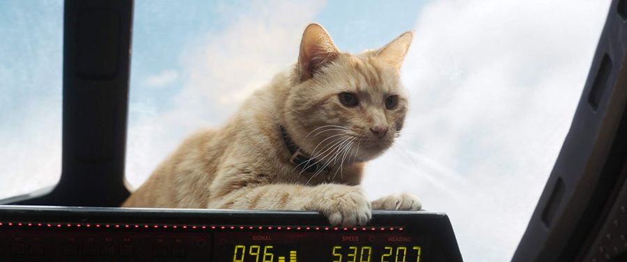 goose the cat - captain marvel - publicity still photo