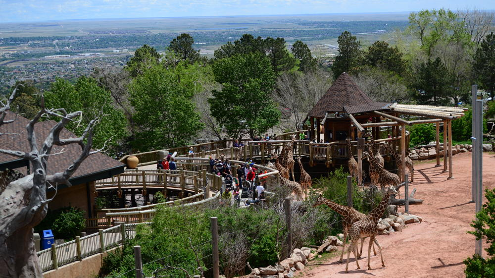 cheyenne mountain zoo, colorado springs, co