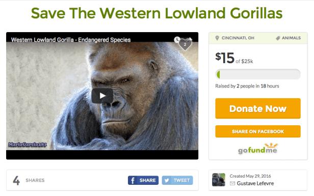 Lowland gorillas Gofundme