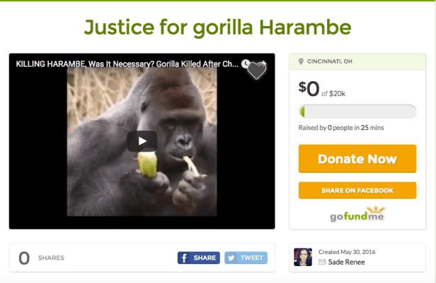 Justice gofundme