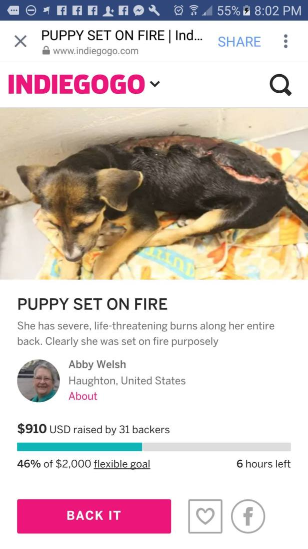 Fake burned puppy Indiegogo