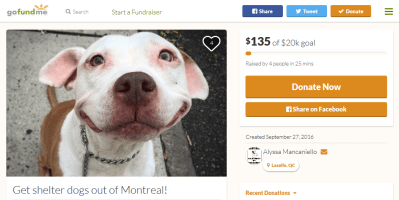 get shelter dogs out of Montreal Gofundme