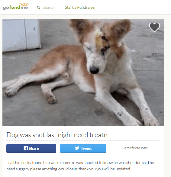 Fake dog Gofundme