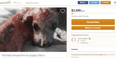 Burned puppy GoFundMe scam