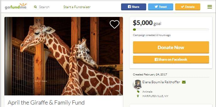 april the giraffe website