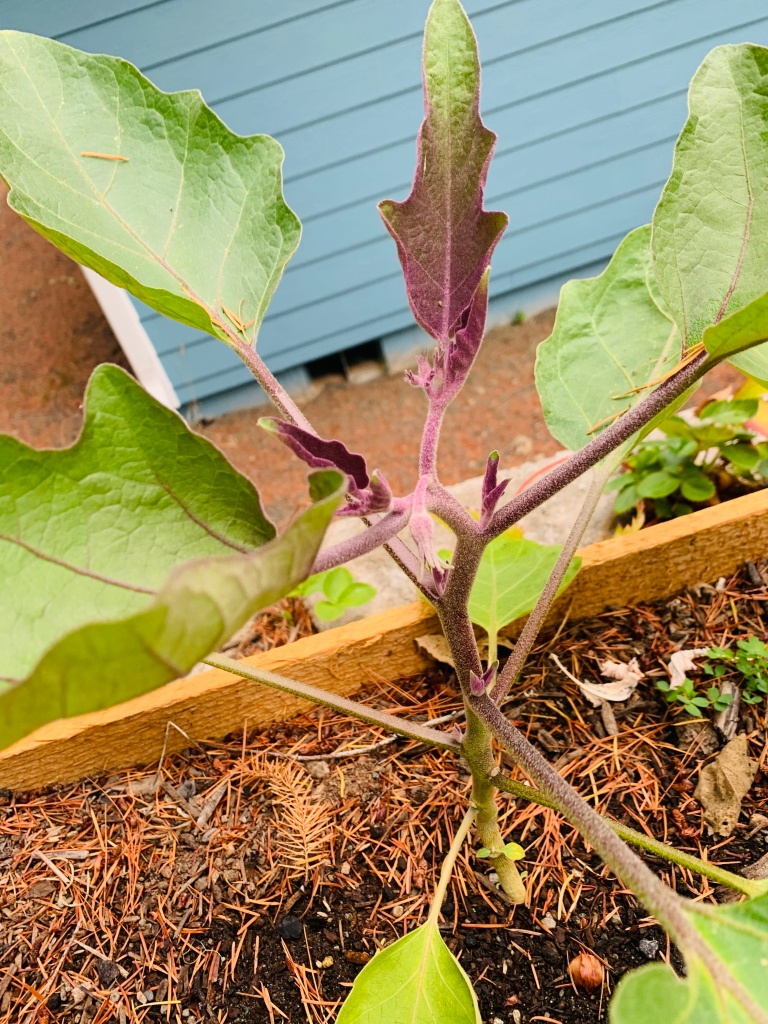 Gardening Update! — Foodie with a Passion
