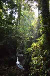 gogirlrun_bali_tipps_Anemina-travels-JalaMonkey-Forest-2