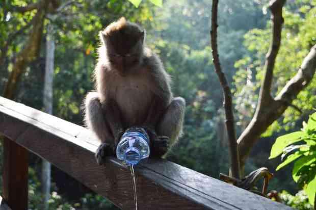 gogirlrun_bali_tipps_Anemina-travels-JalaMonkey-Forest-3