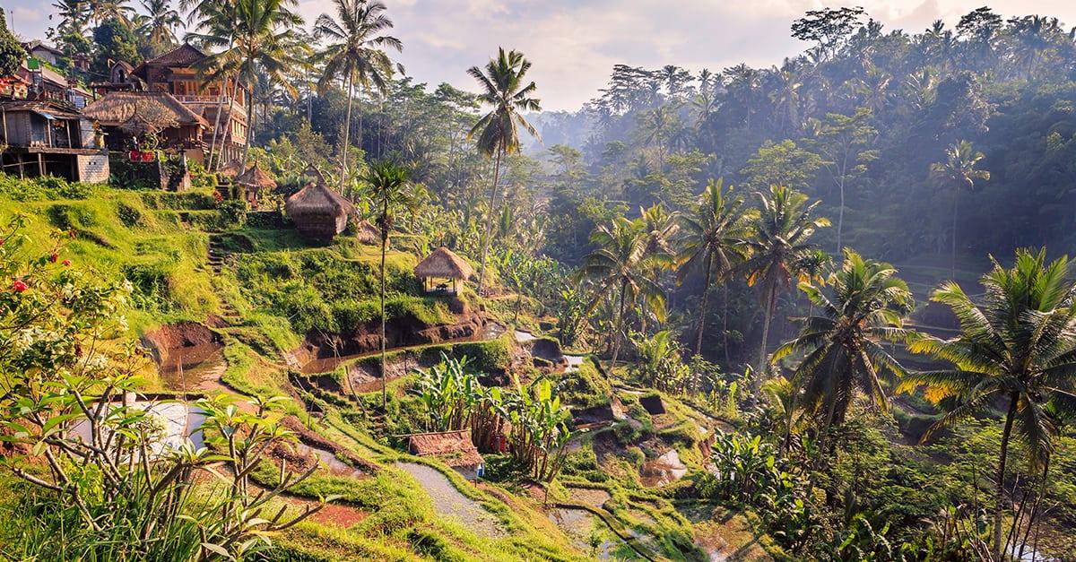 Balitipps von Wo der Pfeffer wächst Heiko