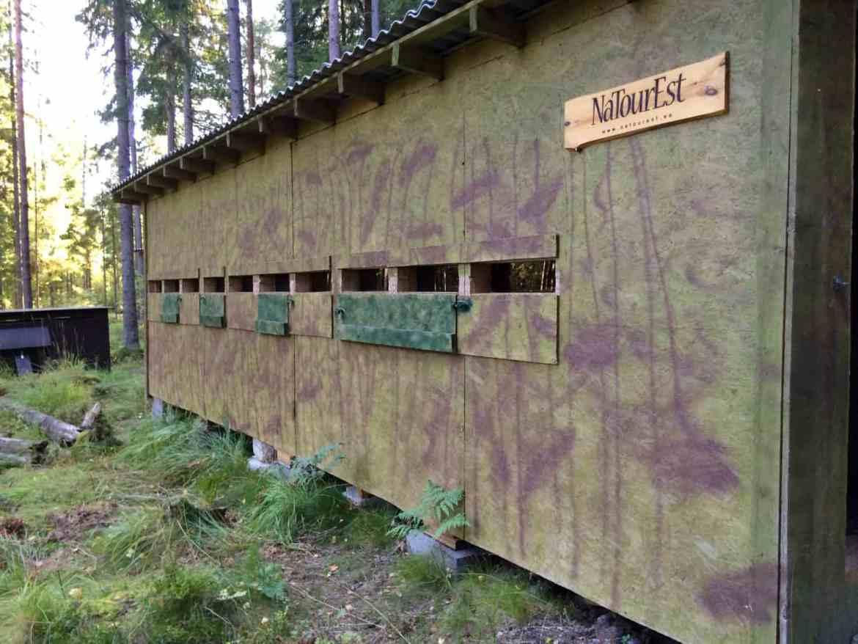 gogirlrun_estland_outdoor_baerenbeobachtung-alutaguse22